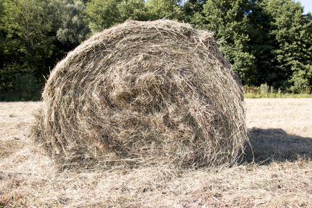 Hay, rolled up in a cylindrical shape coils Stock Photo