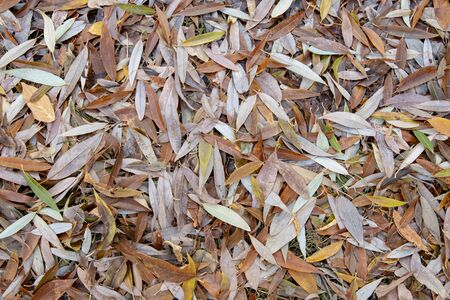 Fallen willow leaves in autumn park as background