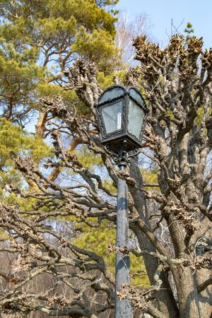 Old lantern on spring background
