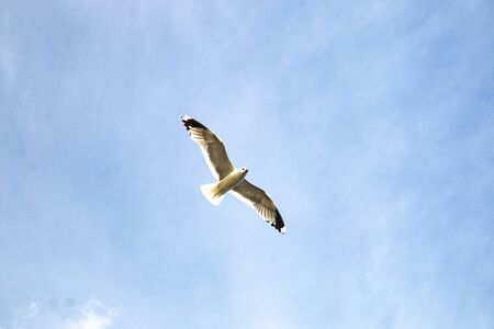 Flying seagull against the blue sky