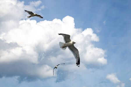 Flying seagulls against sky