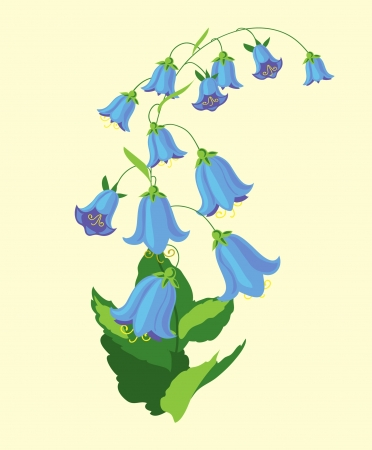 bluebell: bluebell with many blossoms Illustration