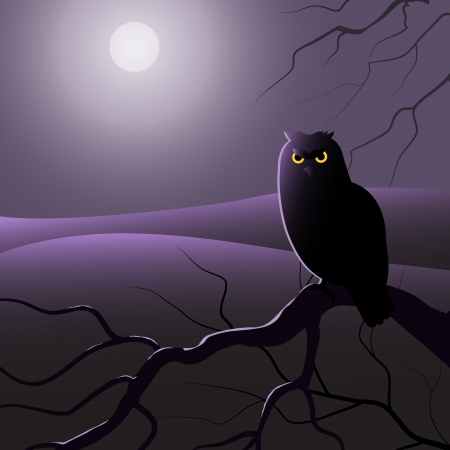 Owl is sitting on the tree branch in the moon light