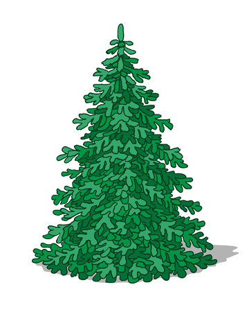 conifers: Simplified image of fir tree on white background.