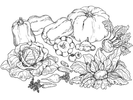 cymbling: Outlines of various vegetables on white .