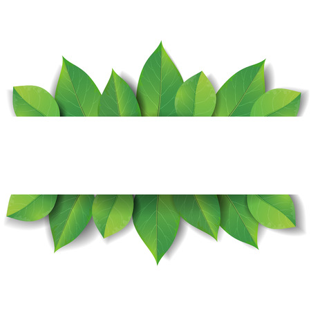 with space for text: Green leaves on white background with space for text