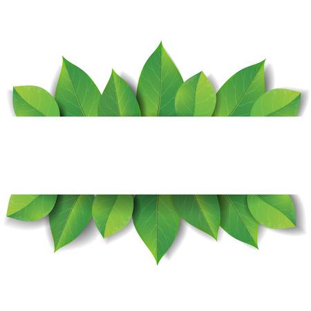 arbol de la vida: Hojas verdes sobre fondo blanco, con espacio para el texto