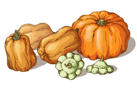 organic farming: Varieties of pumpkin isolated on white background.