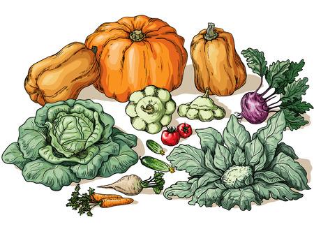 Various vegetables on white background. Vector