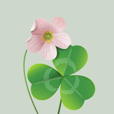 Oxalis flower and green leaf. Illustration