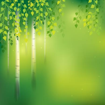 작은 숲: 자작 나무 숲과 함께 봄 배경입니다. 일러스트