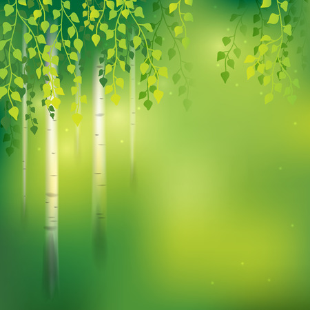 grove: Spring background with birch grove.