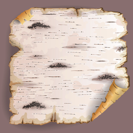 Twisted piece of birch bark. Illustration