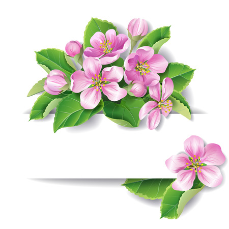 greenness: Apple tree blossom with space for text.