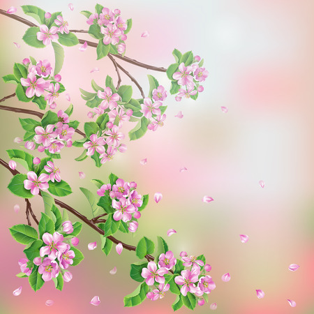 greenness: Spring background with blossoming apple tree branches and flying petals.