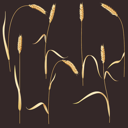 Wheat ears set Vector