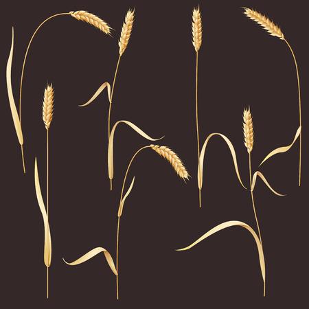 reaping: Wheat ears set