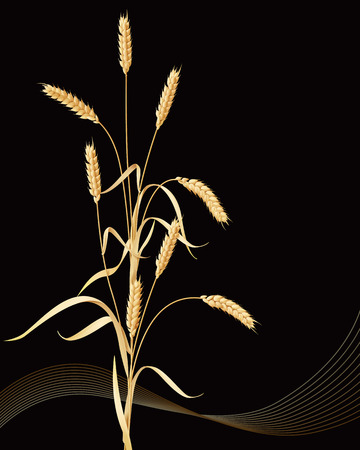 reaping: Wheat ears sheaf on black background.