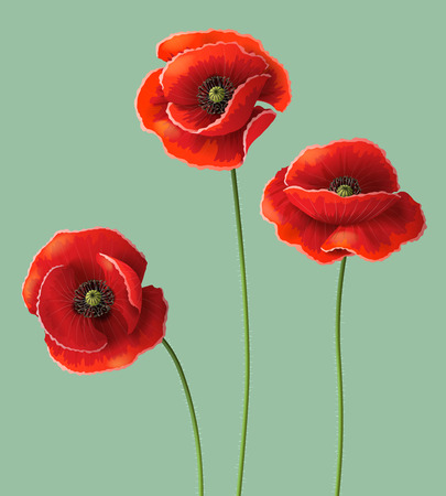 Three red poppy flowers.  Vector