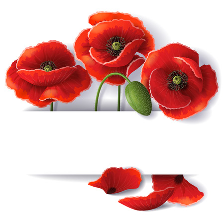 Red poppy flowers with space for text. Vector