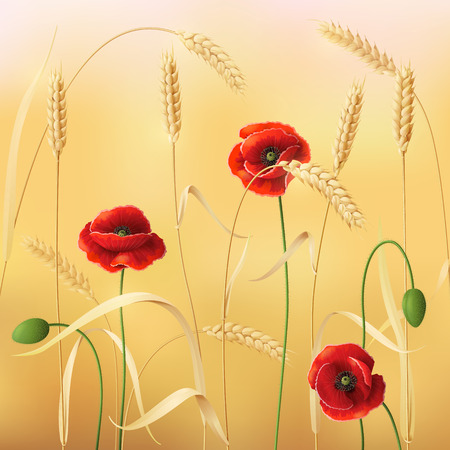 corn poppy: Wheat field with red poppies.  Illustration