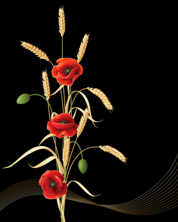 Wheat ears sheaf with red poppy flowers on black background.