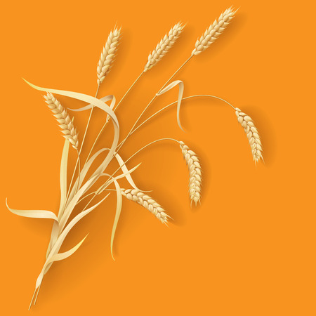 Wheat ears on orange background