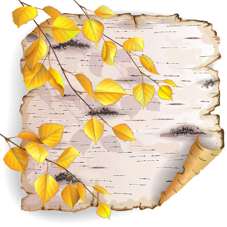 Twisted piece of birch bark with yellow branches. Vector