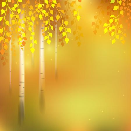 작은 숲: Autumn  background with birch grove.