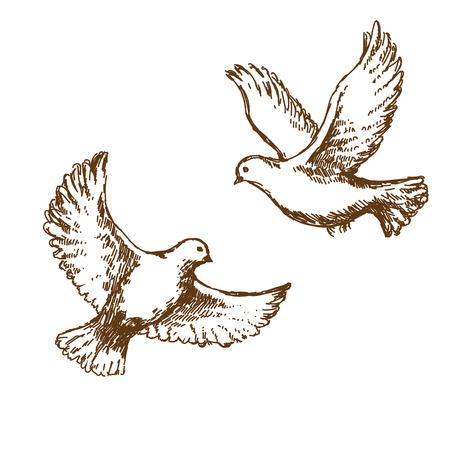 paloma caricatura: Par de palomas volando. Vectores