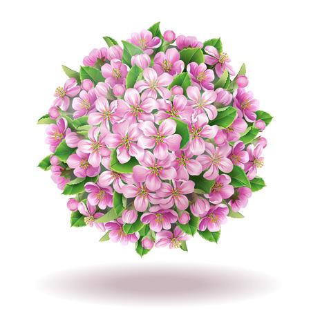 ébredés: Almafa virág globe elszigetelt fehér. Illusztráció