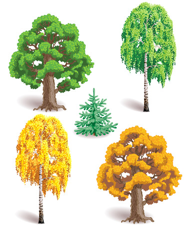 tree crown: Types of trees. Fir, oak and birch with green and yellow leaves isolated on white.
