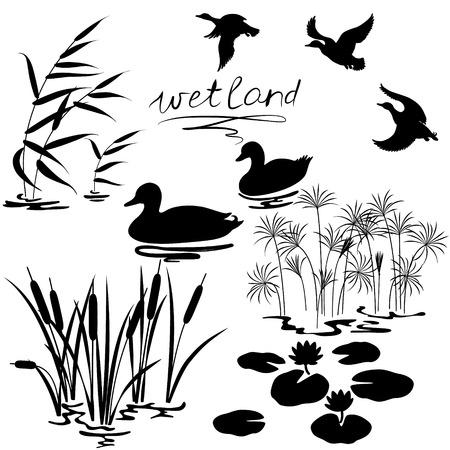 jezior: Zestaw sylwetki roślin wodnych i kaczek.