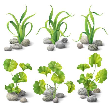 Zielone glony i kamienie zestaw samodzielnie na białym tle.