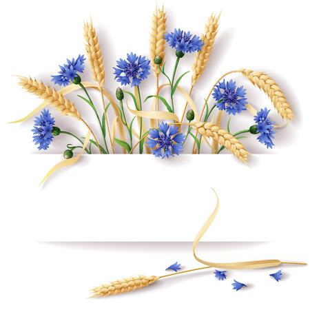 밀 귀 및 텍스트에 대 한 공간을 가진 블루 cornflowers.