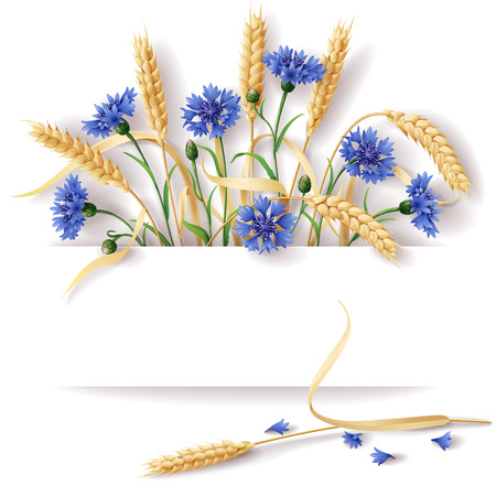 reaping: Wheat ears and blue cornflowers with space for text. Illustration