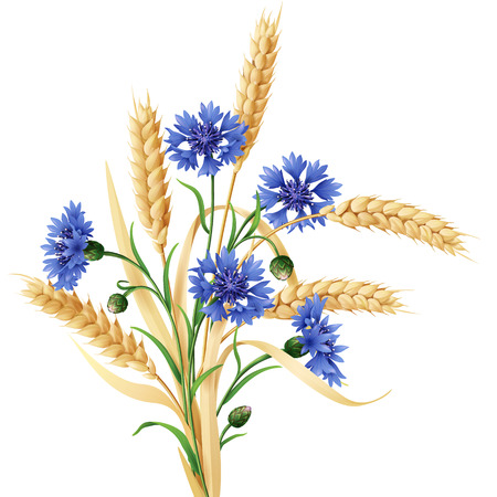 Bunch of wheat ears and blue cornflowers isolated on white. Stock Illustratie