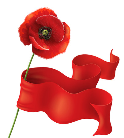recollection: Poppy flower with red ribbon on white. Remembrance Day background.