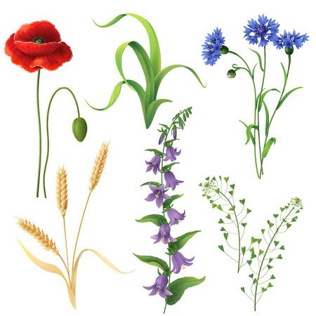 Set van verschillende wilde bloemen, tarwe oren en gras geïsoleerd op wit.