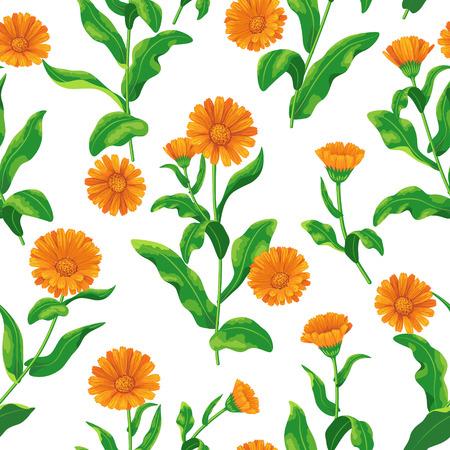Naadloos patroon met trossen oranje calendula bloemen op wit.