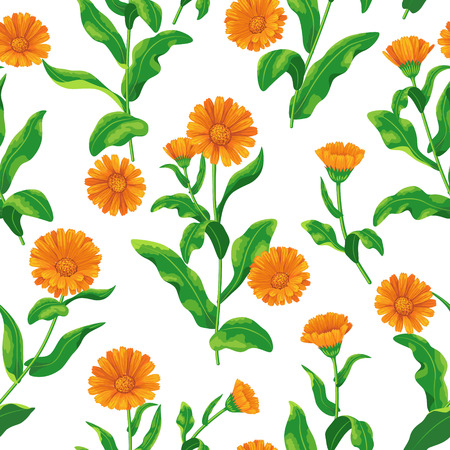 calendula: Seamless pattern with bunches of orange calendula flowers on white.