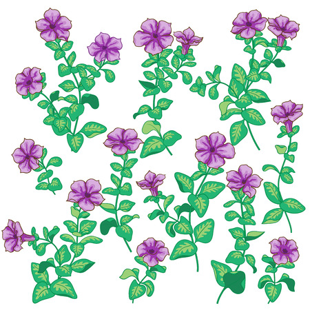 petunia: Violet petunia flowers set isolated on white.