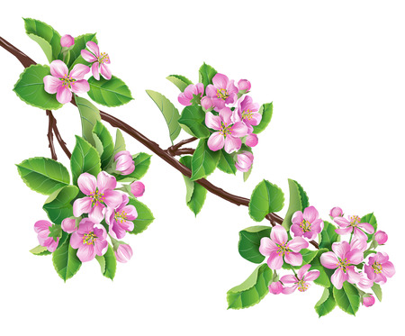 ピンクの花とリンゴの木の枝。