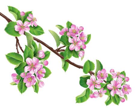 분홍색의 꽃 사과 나무 가지.