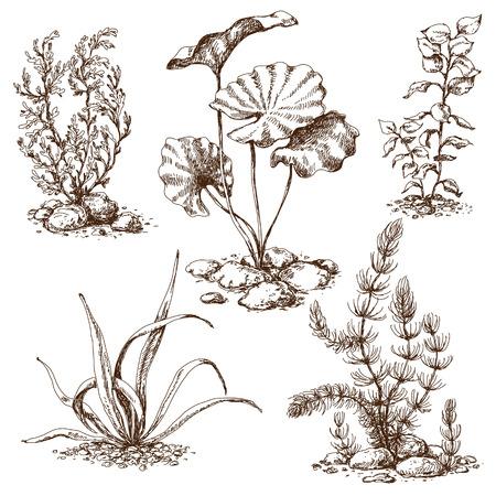 Hand drawn set of algae and stones. Vector