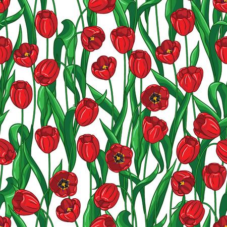 Modelo inconsútil con los tulipanes rojos y hojas verdes sobre fondo blanco.