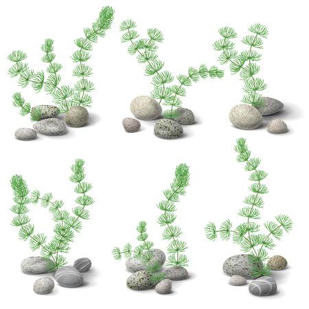 Green hornwort algae and pebbles set isolated on white. Vector