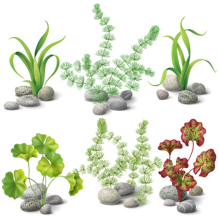 Different kinds of algae and pebbles set isolated on white. Illustration