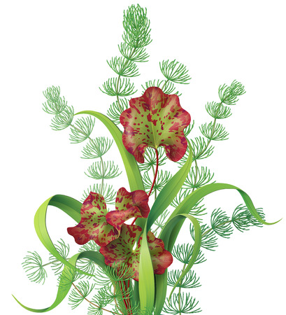 aquatic plant: Bunch of different aquatic plants isolated on white. Illustration