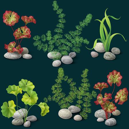 aquarium: Different kinds of algae and pebbles set on dark background.